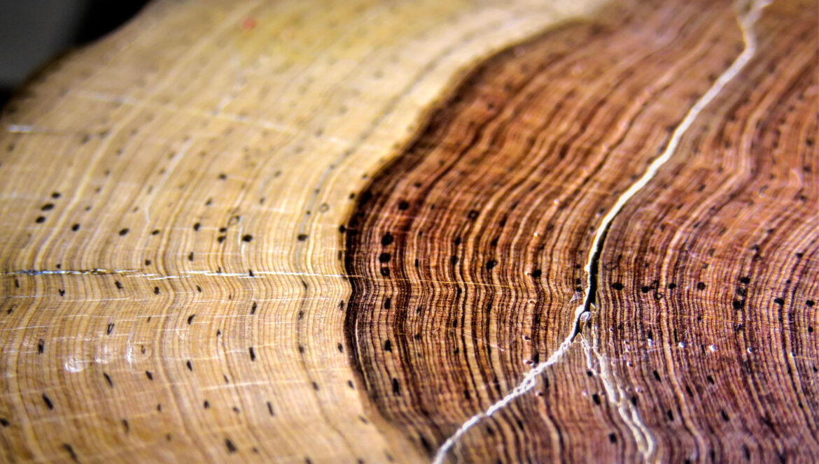 What Tree Rings Can Reveal