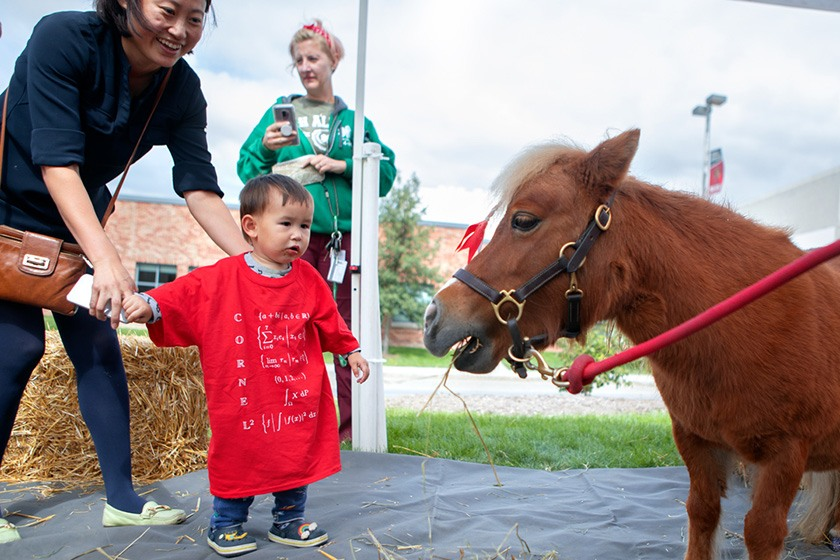 Minnie the miniature horse—unofficial mascot of the College of Veterinary Medicine—face to face with a toddler..