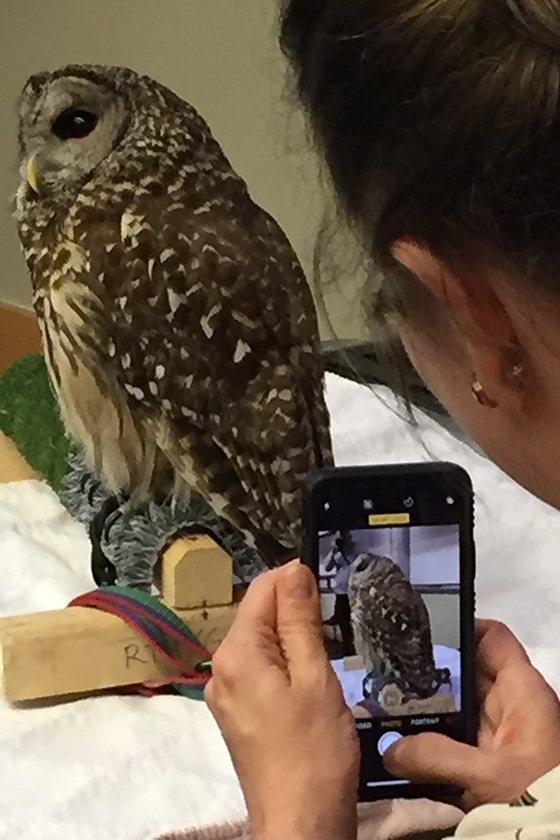 A woman takes a photo of an owl with her phone