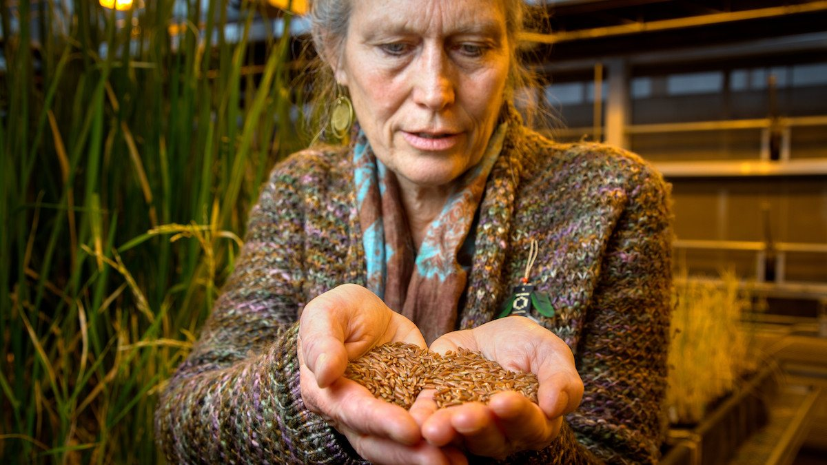 Professor Susan McCouch with a new red rice cultivar