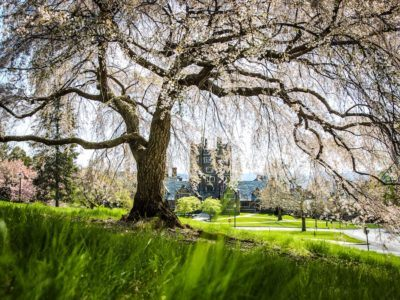 West Campus framed by cherry blossoms.