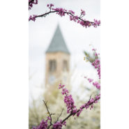 Purple lilacs in front of McGraw tower