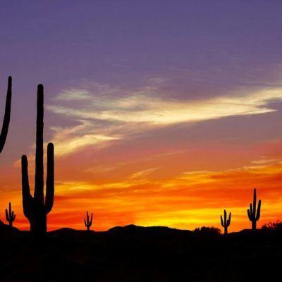 Saguaros at sunset