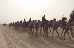 Dr. Van Kerkhove on a MERS research mission in Qatar