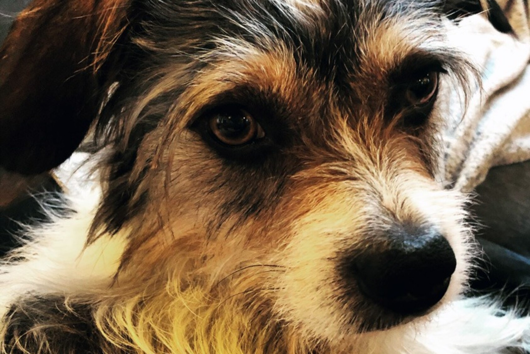 """""""Meet Archie! He came to us from Arkansas through a wonderful rescue organization. We adopted him right after Christmas. He is a 2.5-year-old terrier mix and has settled in nicely to our family. Our favorite thing about Archie is how he loves to give kisses and snuggle!"""" —Lynn (Vitiello) Monaghan '02, Framingham, MA"""