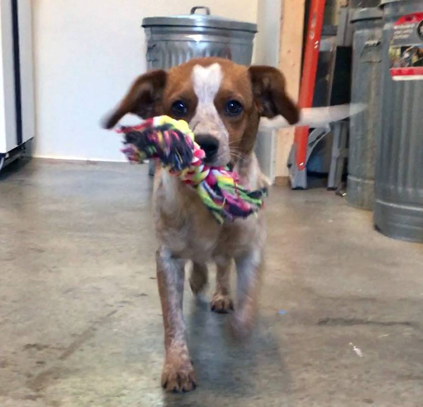 Verbena playing with a toy her future family sent her prior to her adoption.