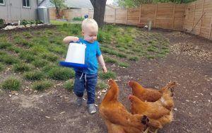 Ezra enjoys feeding the chickens.