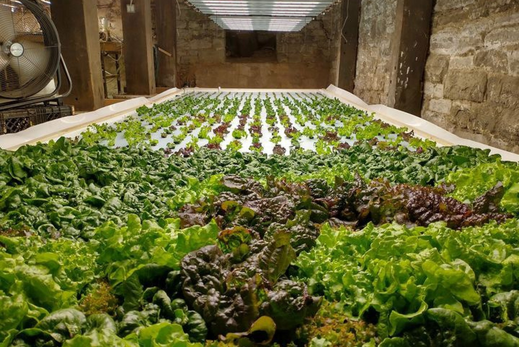 One of three growing beds in the hydroponic root cellar, which produces 150 pounds of produce per week