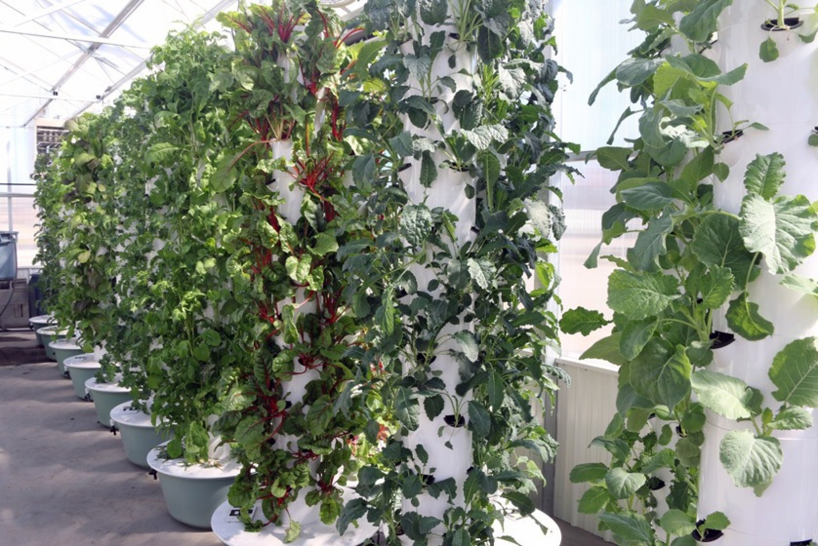 Aeroponic tower gardens in the greenhouse