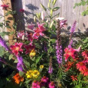 A summer day in Penny's Martha's Vineyard garden is filled with stargazer lillies, liatris, cone flowers, and bee balm.