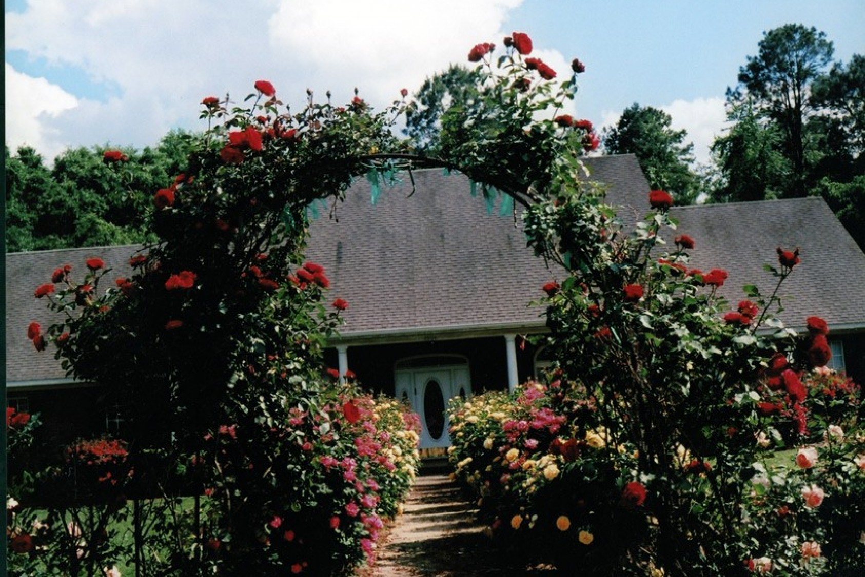 Red climbing Don Juan roses adorn the walkway to Seymour's home.