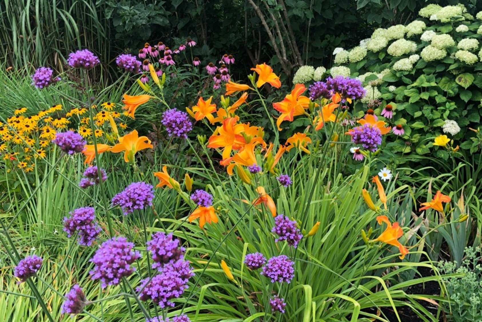 """Some of the colorful blooms in Fred's backyard. """"Gardening is so rewarding,"""" Fred says. """"You see the results of your labor, and it links you to the Earth and its constant renewal and variety."""""""
