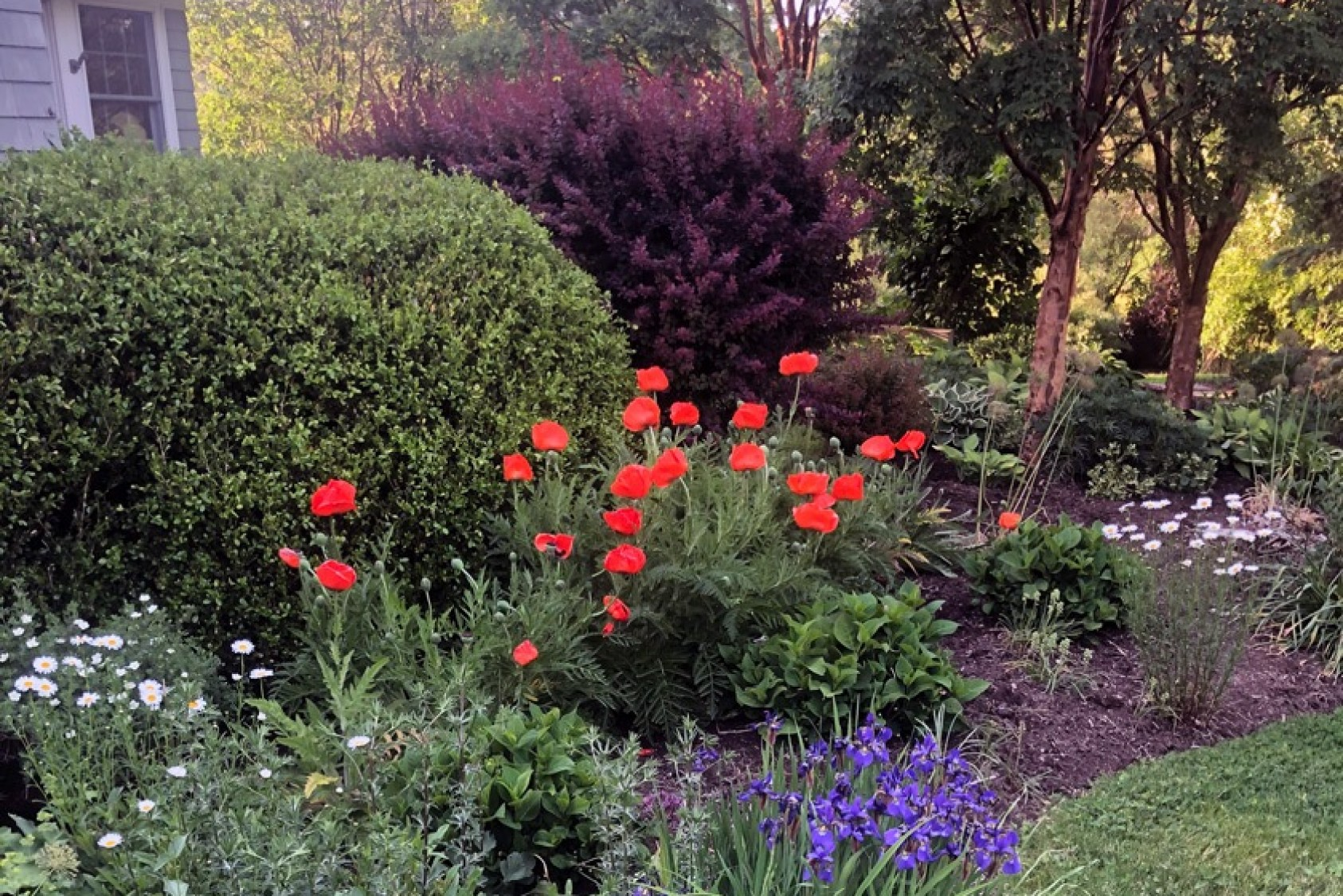 """Poppies and iris galore. Fred has many favorites: """"I have a wide array of alliums which remind me of my grandmother. I also enjoy our sea oats. I could go on and on,"""" he says."""