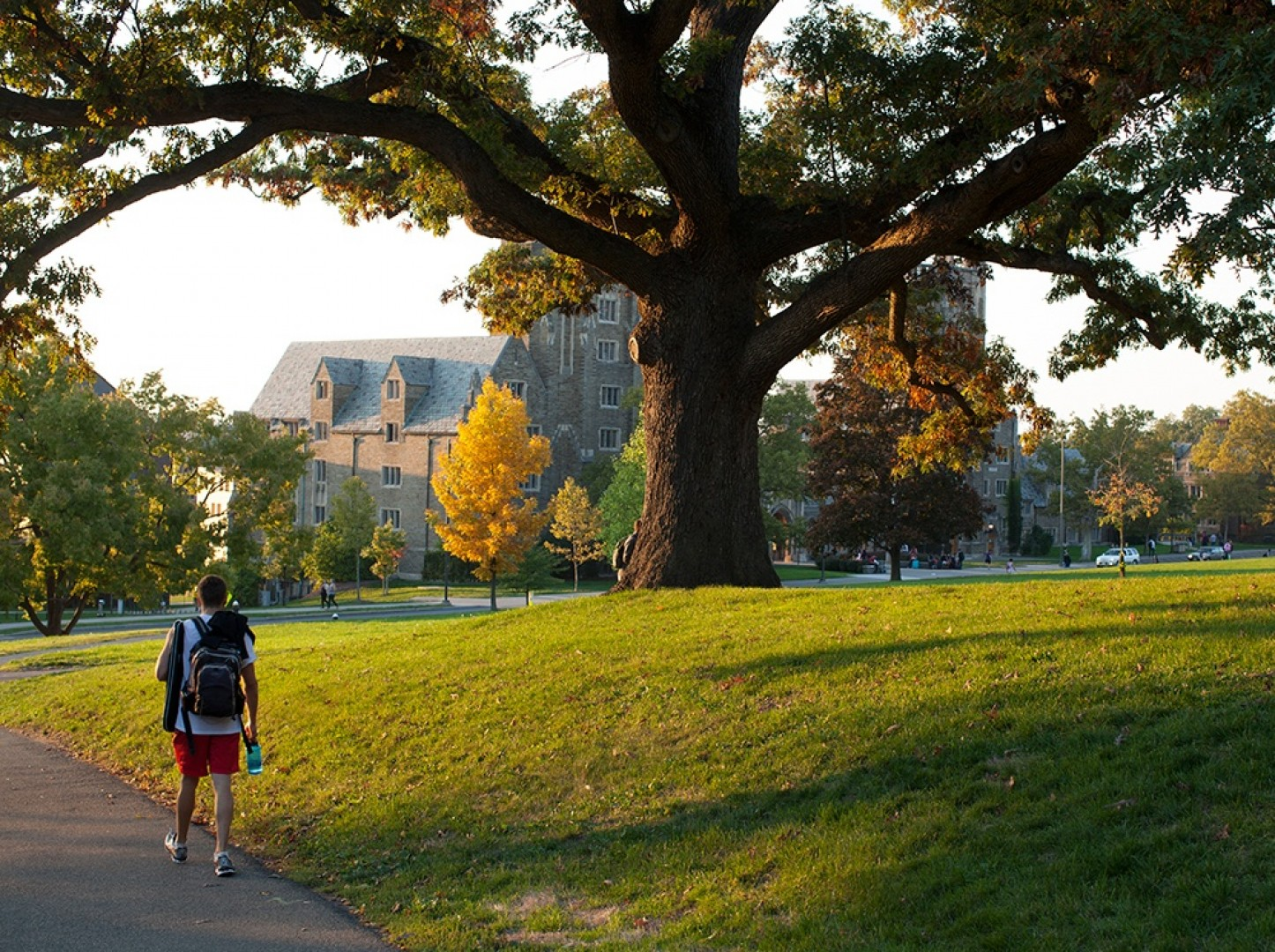 In a 2009 survey, this 350-year-old white oak on the southern end of Libe Slope was identified as the oldest tree on Cornell's main campus.