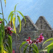 Ancient ruins in Peru