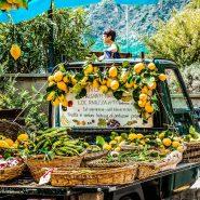 Farmer's truck full of lemons